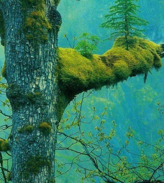 tree on tree Resurse