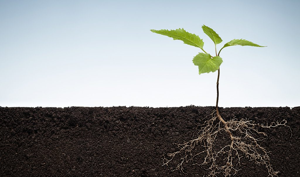 root plant Studii Adolescenți