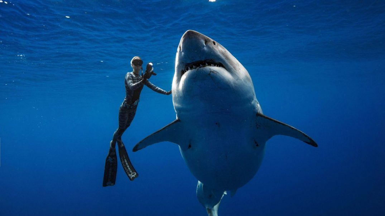 shark1 Studii Juniori