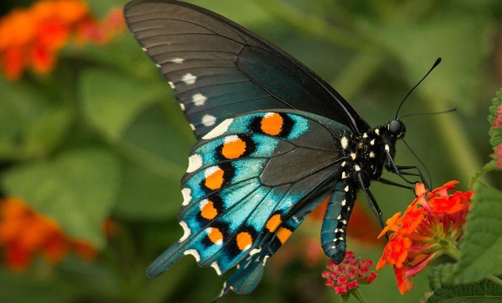 butterfly7 Studii Juniori