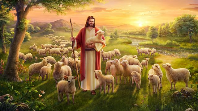 Jesus sheep Studii Juniori
