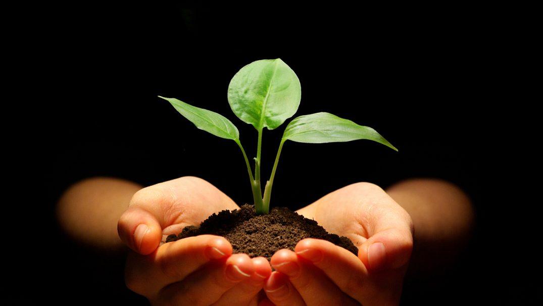 growing1 Studii Majori