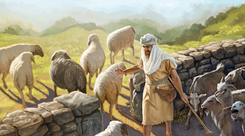 sheep and goats Studii Majori