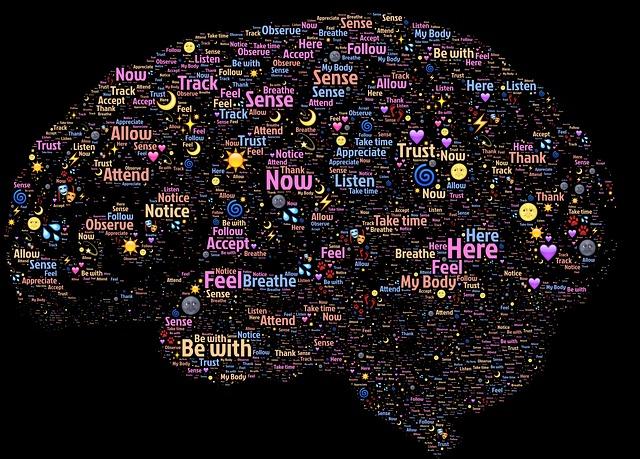 brain2 Studii Juniori