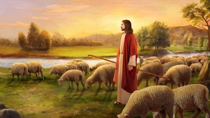 Jesus sheep4 Studii Majori