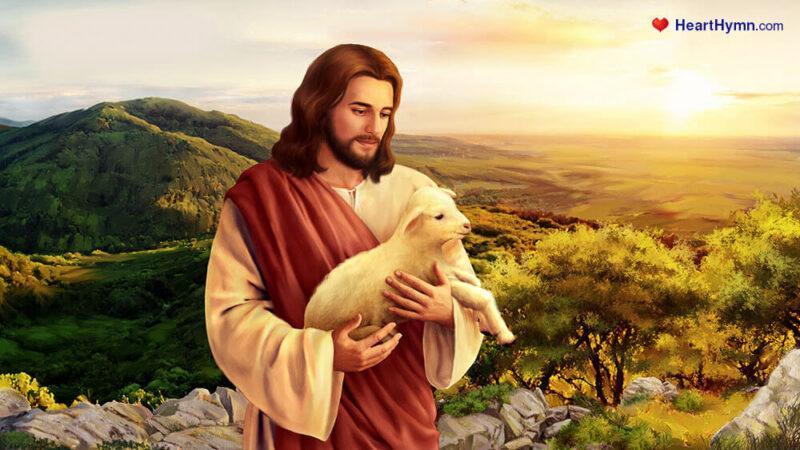 Jesus sheep5 Studii Majori